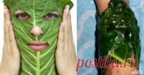 Белокочанная капуста – плод жизни  Капусте приписывались лечебные свойства ещё с древних времен.Её назвали «врачом для бедных», ведь растение не прихотливо в произрастании, а польза от него колоссальная.        Капуста имеет в своем составе антиоксиданты, которые омолаживают кожу