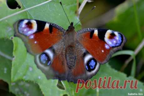 Бабочки и пчелки в октябре!Настоящее бабье, а может бабочкино лето? Мои макрофото.