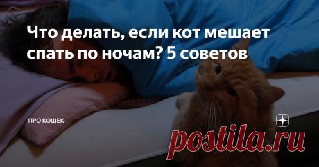 Что делать, если кот мешает спать по ночам? 5 советов Удивительно но, несмотря на то, что наши питомцы могут спать до 20-ти часов в сутки, хозяева кошек часто жалуются на недостаток сна. Почему же получается, что время активности котика приходится именно на ночной сон хозяина? Как приучить питомца спать по ночам?