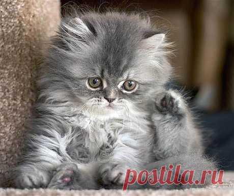 Funny Grey Tabby Kitten | Flickr - Photo Sharing!