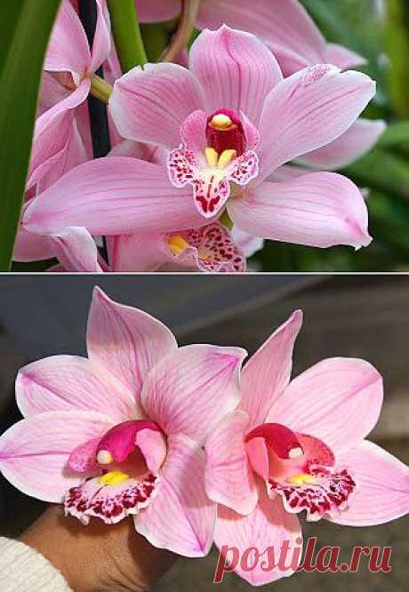 Орхидея цимбидиум. от лепки до покраски.