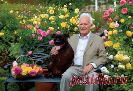 10 вопросов о розах Дэвида Остина | Розы (Огород.ru)