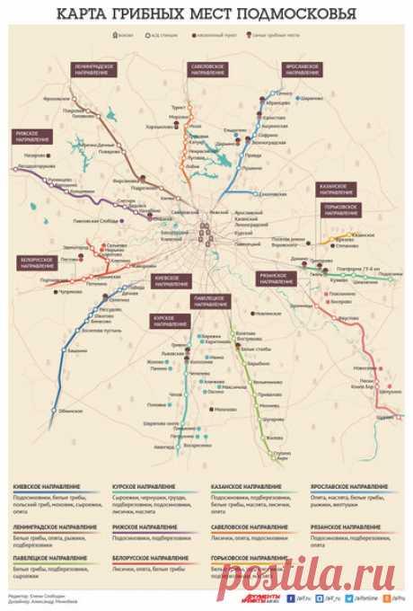 Грибная карта Подмосковья | ЦВЕТАНА | Яндекс Дзен