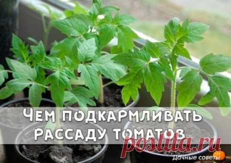 Чем подкармливать рассаду томатов Если рассада томатов правильно развивается, то через каждые 5-7 дней будут появляться новые листочки. Это говорит о том, что ваши растюхи питаются хорошо.   Раз в 2 недели хорошо поливать их раствором древесной золы.  Столовая ложка золы заливается 1 литром кипятка на ночь.  Утром процедить, подогреть до 35 градусов, полить рассаду под корень. Полезно каждые 14 дней проводить внекорневую подкормку суперфосфатом. 1 чайная ложка на 1 литр кипятка настоять