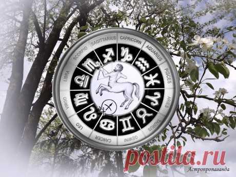 Прежде чем делать, хорошо подготовьтесь. Гороскоп для Стрельца с 29 марта по 2 мая 2021 | Астропропаганда | Яндекс Дзен ♐✨ Автор: астролог Нина Стрелкова. ✧ Это неплохое время для решения старых вопросов и отложенных задач. Только не приступайте к делу в порыве чувств. Ко всему нужно тщательно подготовиться, предусмотреть все мелочи. Это время приобретения нового опыта, формирования более реалистичного взгляда на многое вещи.