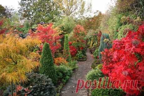 Красиво и полезно. Разбираемся в декоративных плодовых кустарниках   Осень — время обновления сада. Не пора ли посадить в нём что-нибудь новенькое? Например, что-то такое, чтобы и вид был симпатичный, и урожай не бешеный, но приятный. Для таких случаев существует гру…