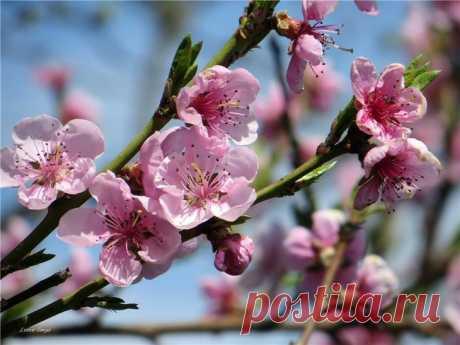 Весны круговорот