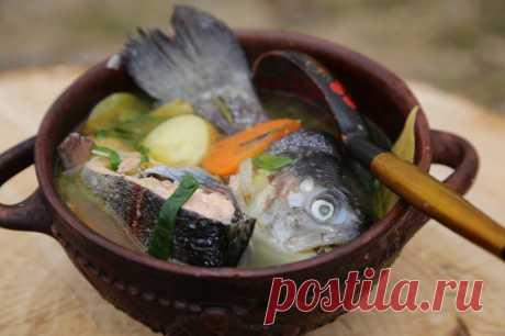 Рыбный суп из головы форели Рыбный суп из головы форели Купить целуюрыбину элитного сорта может не каждый, зато ее фрагменты стоят дешево. И пусть из них возможно приготовить ограниченное число блюд, все они выйдут полезными и замечательными. Вспомогательные компоненты тоже имеют низкую цену. Значит, среднестатистическая семья дополнит повседневное меню отличным кушаньем, не расходуя деньги на приобретение деликатесов. Потребуются продукты:  примерно 70-граммовая голова а...