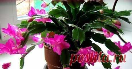 чтобы цветы в доме цвели пышно и долго