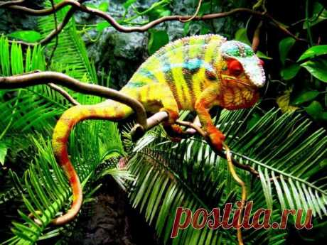 Самые яркие представители животного мира Разнообразие и красота природы поражают воображение. Все животные неповторимы и очень разнообразны. У одних животных необычные и интересные глаза, другие отличаются миниатюрными размерами, а третьи фа...