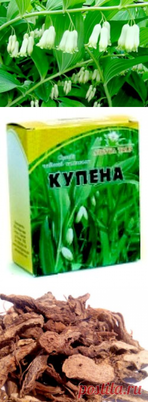 Купена лекарственная - польза и применение растения