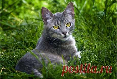 Желтоглазая кошка на зелёной траве