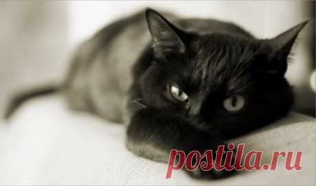 Немного о кошках…   Блог одной Леди - Любовь, Страсть, Дружба, Жизнь