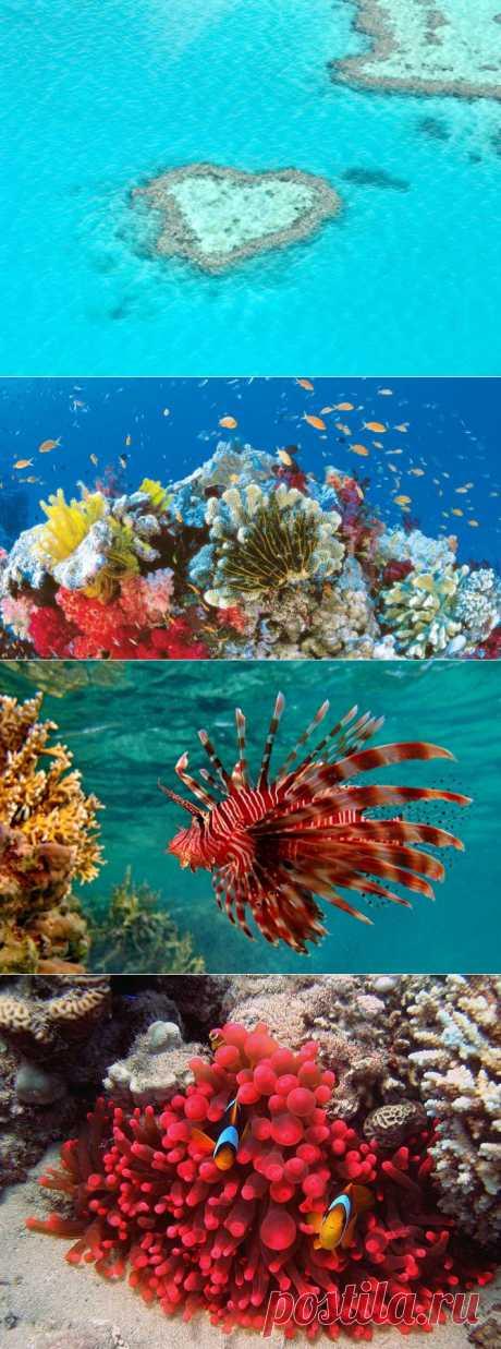 (+1) тема - Большой Барьерный риф | ТУРИЗМ И ОТДЫХ
