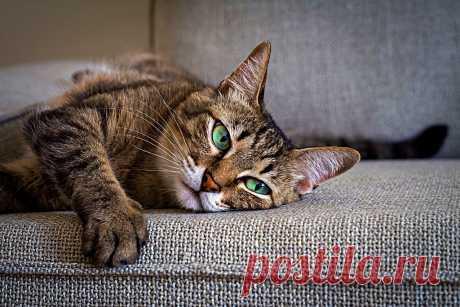 6 кошачьих привычек, которым зря потакают многие хозяева