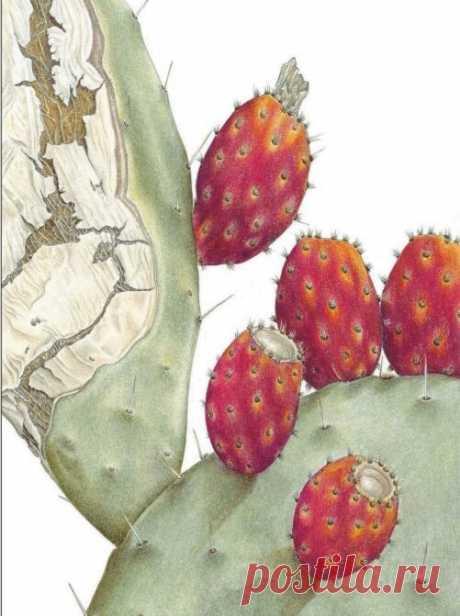 Современная техника изображения растений, хорошо забытое старое, чем рисуют ботаническую иллюстрацию. | Арт Енотова - творчество | Яндекс Дзен