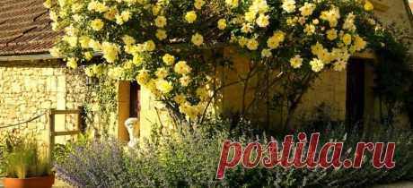 Троянди: клаймбери та рамблери головні відмінності плетистих красунь