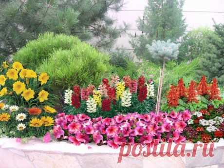 Сочетание цветов в клумбе на даче: идеи совмещения растений