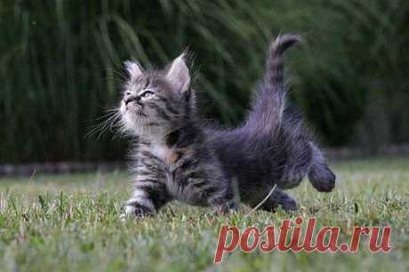 КОШКИ нас ждут!   Приколы про котов :)