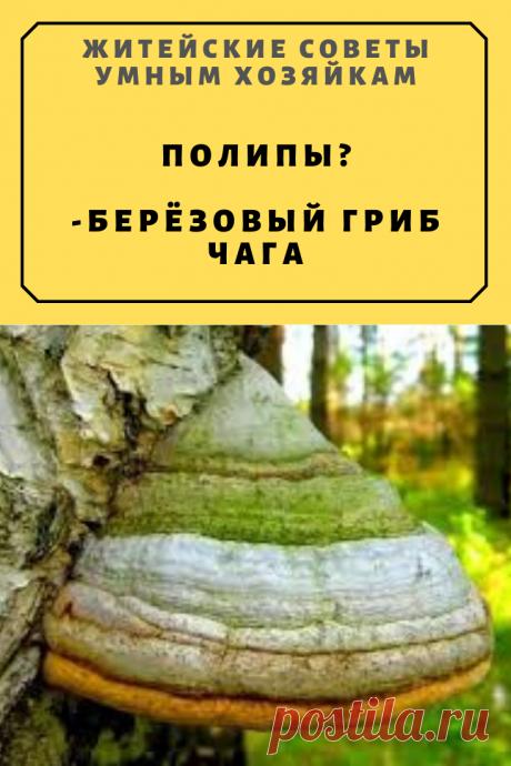 Полипы. Мой лекарь-берёзовый гриб чага. | Житейские Советы