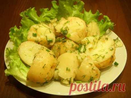 Как готовить картофель правильно, чтобы похудеть - InForm35.ru По утверждению диетологов, картошка относится к видам продуктов, очень полезных и нужных человеческому организму. Особенностью растения является то, что в