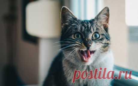 Гемобартонеллез у кошек: симптомы и лечение | Кот и Кошка | Яндекс Дзен