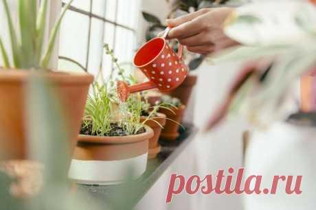 5 универсальных правил полива комнатных растений