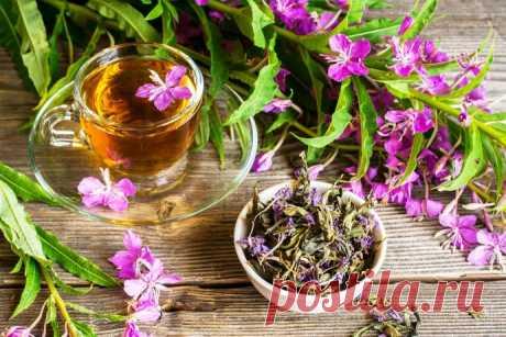 Невероятные свойства Иван-чая