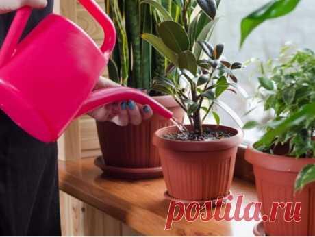 Одиннадцать способов удобрить домашние растения — Бабушкины секреты