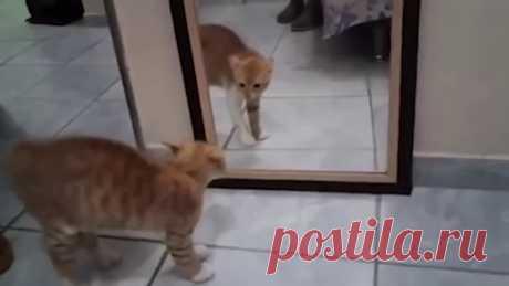 Вся Украина в одном видео Украина как этот кот перед зеркалом, всех пугает и обсирается от страха! :)