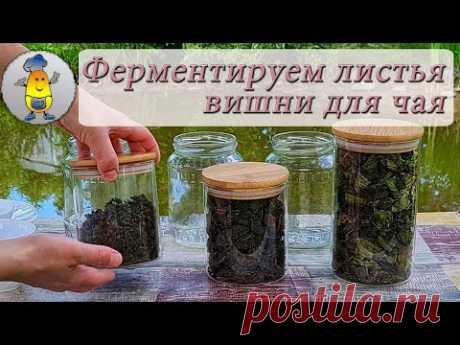 Ферментированный чай из вишневых листьев | Как ферментировать листья вишни от А до Я