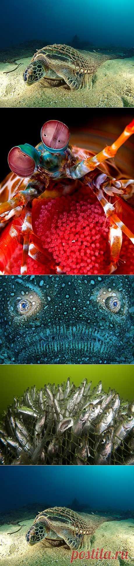 » Лучшие фотографии подводного мира 2010 Это интересно!