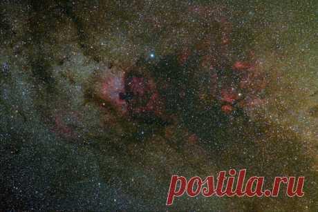 Туманности Северная Америка и Пеликан в созвездии Лебедь. Автор фото – Эдуард Важоров. Космических снов!