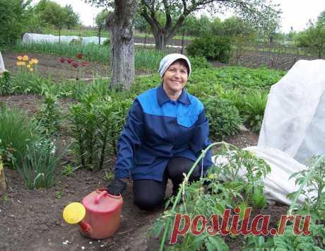 Полезные советы не только начинающим, но и опытным огородникам  Для быстрого роста помидор Рассаду помидоров поливают раствором йода для более быстрого роста (1 капля на три литра). После применения этого раствора рассада зацветёт быстрее, а плоды будут крупнее. …