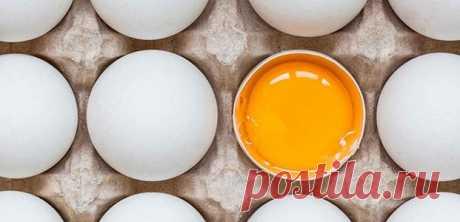 Холестерин в яйцах – опасен или нет