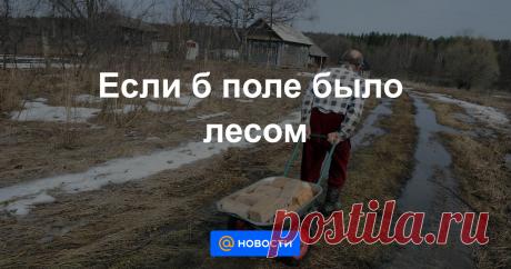 Если б поле было лесом В России впервые ЛЕСА станут ЧАСТНОЙ СОБСТВЕННОСТЬЮ.