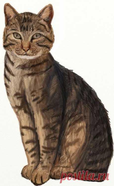 Рисуем кошку — Сделай сам, идеи для творчества - DIY Ideas