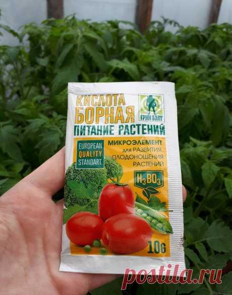 Не пропустите очень важную подкормку томатов в стадии бутонизации. | Огородник из Рязани | Яндекс Дзен