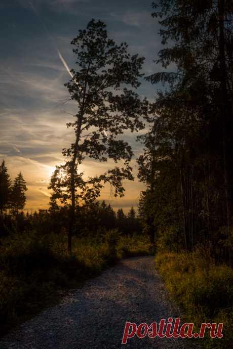 Mountain Wolf — stephiramona: Beautiful day