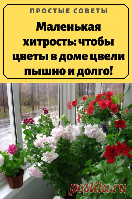 Маленькая хитрость: чтобы цветы в доме цвели пышно и долго!Давно ли Ваш любимый цветок цвел, как в магазине цветов, не помните? Вот и я уже почти позабыла. Вроде и подкармливаю его, а он все не радует пышным цветением.