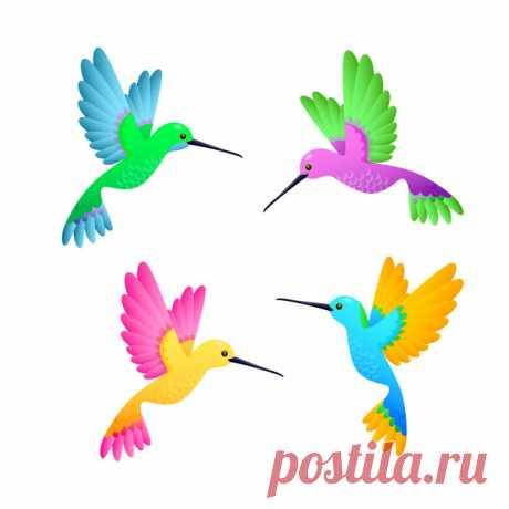 Descarga gratis Colibrí colorido conjunto Descubre miles de vectores gratis y libres de derechos en Freepik