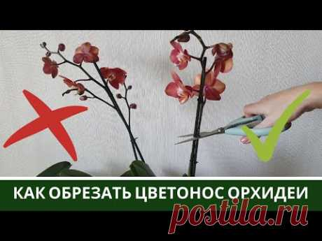 ДЖЕМ Орхидеи