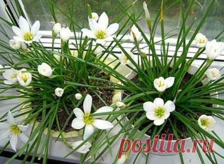Стимулятор роста комнатных цветов — Полезные советы