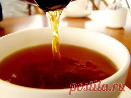 13 вариантов чая из веток деревьев и кустарников