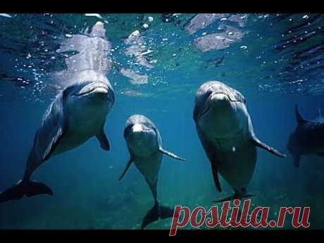 Дельфины в oкeaнe (♪♫ Альберт Артемьев) HD