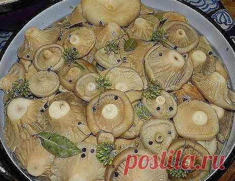 ЛУЧШАЯ ПОДБОРКА ЗАСОЛКИ ГРИБОВ НА ЗИМУ!  грибы (рыжики, черные и белые грузди, волнушки, сыроежки) - 1 кг  соль - 100 г  смородина - 10–12 листьев  вишня - 5–6 листиков  хрен - 2 листа  укроп - 2 зонтика  лавровый лист - 2–3 шт.  перец горошком - по вкусу  чеснок - по вкусу Грузди, волнушки или сыроежки вымыть и залить холодной водой на 5–6 ч. (Рыжики не вымачивают, а только промывают). На дно деревянной или керамической посуды насыпать слой соли, положить половину листьев...