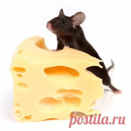 Мудрые советы бабушки | ПолонСил.ру - социальная сеть здоровья