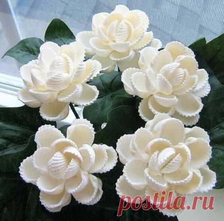 Цветы из ракушек