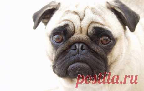 Ветеринары рассказали о собаках, которые страдают всю жизнь . Тут забавно !!!