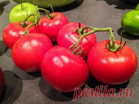 7 лучших томатов низкорослых сортов (открытый грунт)   Дачная жизнь   Яндекс Дзен